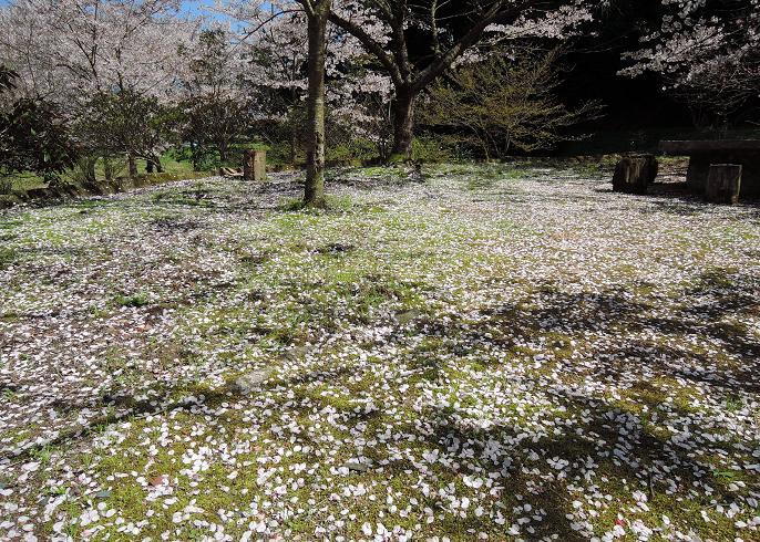 花弁の絨毯.jpg