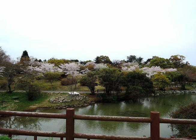 鏡山の桜.jpg