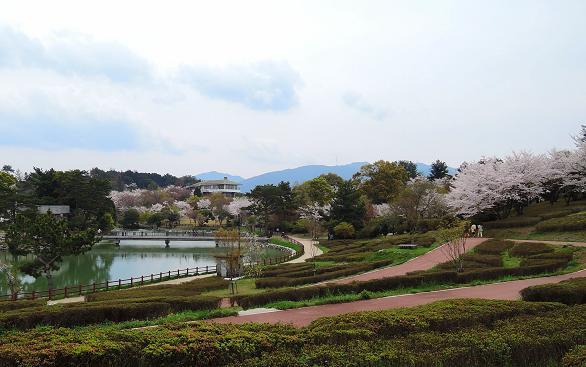 鏡山の桜2.jpg