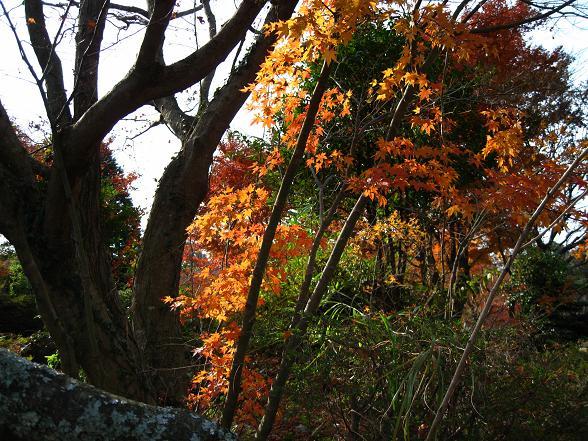 鏡山の紅葉.jpg