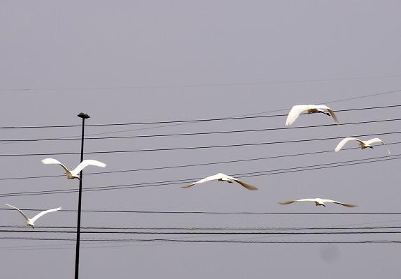 飛翔.jpg